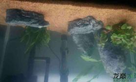 我的草缸水草缸我是新手水草缸欢迎指导鱼缸水族箱