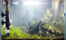 水草造景开缸两个月后水草缸翻缸了水草缸秀一下留个纪念