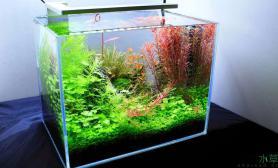 尽享色彩、肆意创造鱼缸水族箱