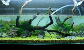 缸体尺寸:90*45*45用沙子都能轻松养好水草希肯90cm水景