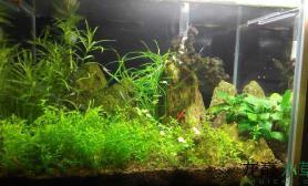 水草造景小草缸的更新