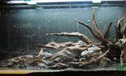 草缸里的风采——毋庸置疑鱼缸水族箱看来这些水草缸你能不中毒吗?哈哈
