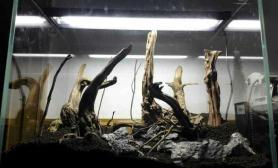 新造的骨架