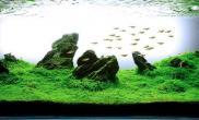 水族箱造景迷你矮与青龙石的完美邂逅---水草缸