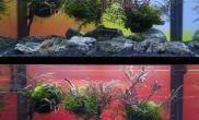 水草缸之藝術——这么多让人掉口水的草缸水草缸哪个让你中了毒?