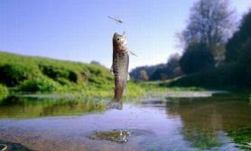 摄影师抓拍鱼跃出水面瞬间(图)