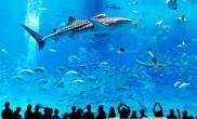 相当于3个游泳池的日本巨型鱼缸(图)