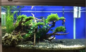 水草造景新开的80水草缸鱼缸水族箱