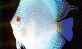 鱼融水养鱼心得之二(图)