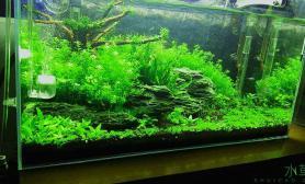 水草造景60小草缸满月水草缸水王CO2的用户大家一次勾兑能用多久?