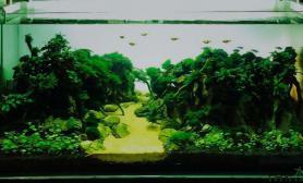 水草造景【龙巅水草第二届造景大赛】深山幽谷
