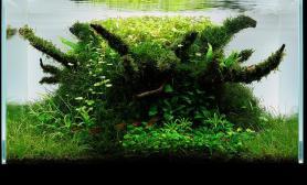 沉木青龙石水草造景90CM尺寸设计19