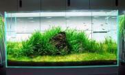 金鱼缸种什么水草