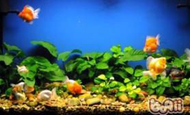 观赏鱼缸的背景图选择