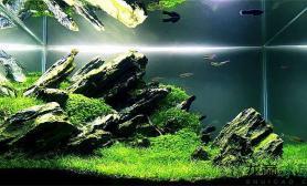 《青峰峡》小缸造大景