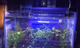 水草造景菜鸟开缸一个月