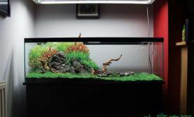 水族箱造景一个沉木水草缸
