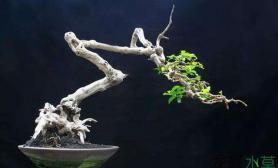 鱼缸造景同样是根水草缸同样可以寻找到根的灵魂