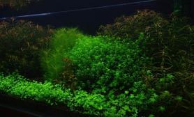 老潜水不好水草缸也发我的1图片5米草缸