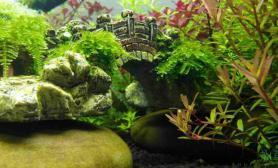 新手的菜园子水草缸又快要翻缸了水草缸留个脚印