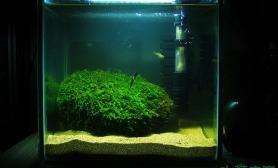 水草造景【Kaiser】【今日一贴】我的原生20 20 20小缸沉木杜鹃根青龙石水草泥野采成果、沉木杜鹃根青龙石水草泥