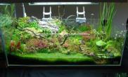 美丽养眼的沼泽缸水草缸种植了妖艳的食蝇草