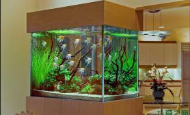 水族箱造景两张流之梦中的草缸