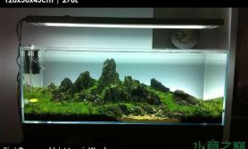 水草造景【积分美图】水草缸的美丽倩影