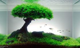 请问这棵树顶是怎么造景的?