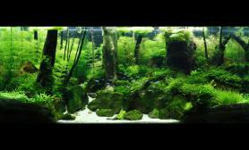 水草缸造景沉木水草泥化妆砂青龙石120CM尺寸设计103