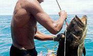 热带观赏鱼之乡(图)