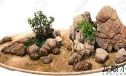 大自然的石头造景