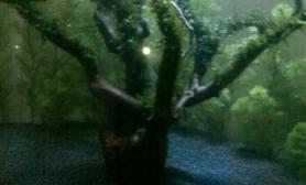 看我绑的莫斯树鱼缸水草造景沉木杜鹃根
