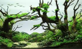 水草缸造景沉木水草泥化妆砂青龙石60CM尺寸设计77