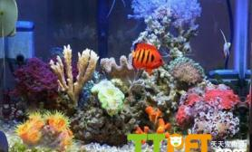 什么是珊瑚岩礁生态造景缸