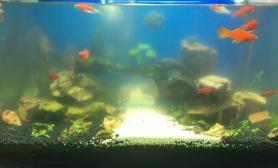 酷鱼太猛水草缸直接暴藻了