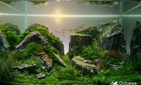 45CM鱼缸木化石造景