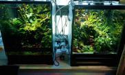 【雨林缸】出门一周回来水草缸看喷淋系统在雨林缸里的作用