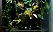 雨林水陆生态缸19