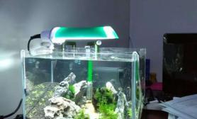 水草造景办公室40小缸满月照鱼缸水族箱鱼缸水族箱