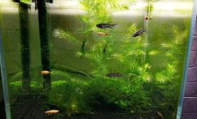 25小缸水草缸自然小清新