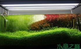 水族箱造景这样的水草造景水草缸状态真是绝了