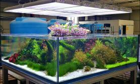 水草造景方缸、双面隔断缸 超大缸