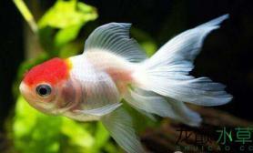 鱼缸造景金鱼介绍水草缸一起了解一下