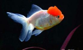 光线对观赏鱼的影响