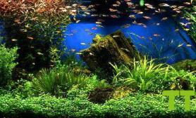 水草水陆生态缸欣赏夏艳