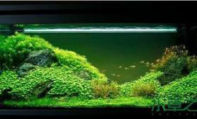 水草造景欣赏