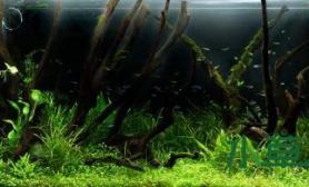 灌木堡垒——以自然写实为主的热带雨林在雨季时的枯木与底层旺盛的生命力