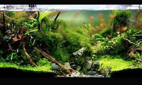 水草缸造景沉木水草泥化妆砂青龙石120CM尺寸设计76
