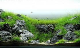 水草缸造景沉木水草泥化妆砂青龙石150CM及以上尺寸设计33